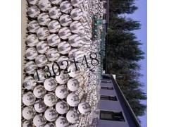 电力绝缘子串生产厂家【35KV棒形复合绝缘子价格】